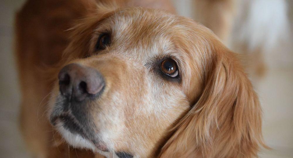 Vibrantes retrouvailles entre deux meilleurs amis chiens - vidéo
