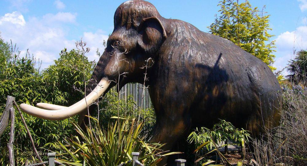 Les restes de dizaines de mammouths découverts au Mexique avec des ossements humains - photos