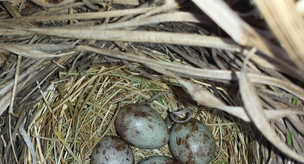 Des oiseaux construisent un nid dans son pantalon pendant le confinement - photos