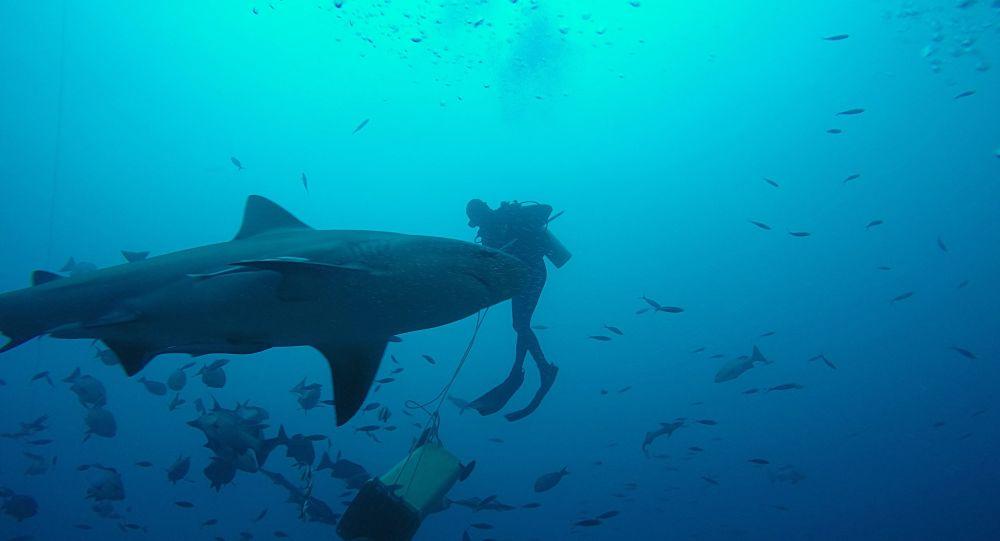 «Deux minutes de terreur»: un requin-taureau de 3,5 mètres attaque un étudiant en Australie – photos