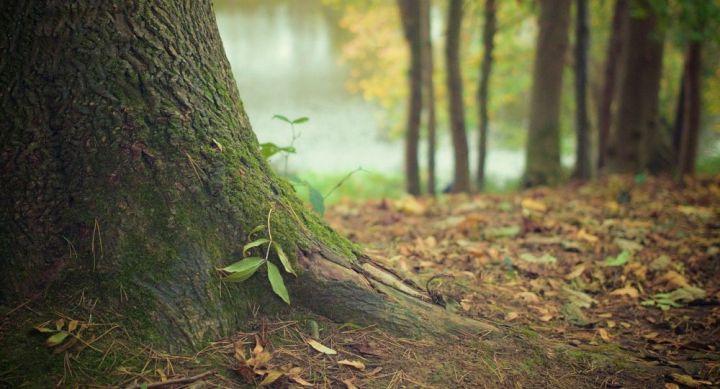 Un projet immobilier mordant sur un bois classé est validé par le maire écologiste de Tours