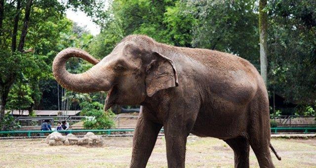 Un éléphant