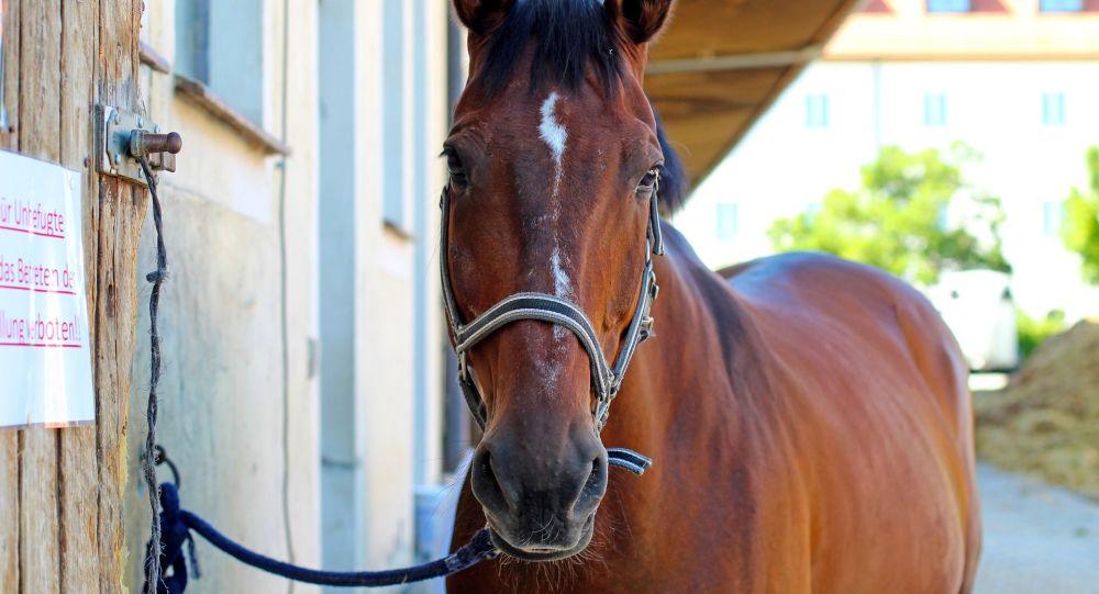 Le fléau des chevaux mutilés gagne la Suède
