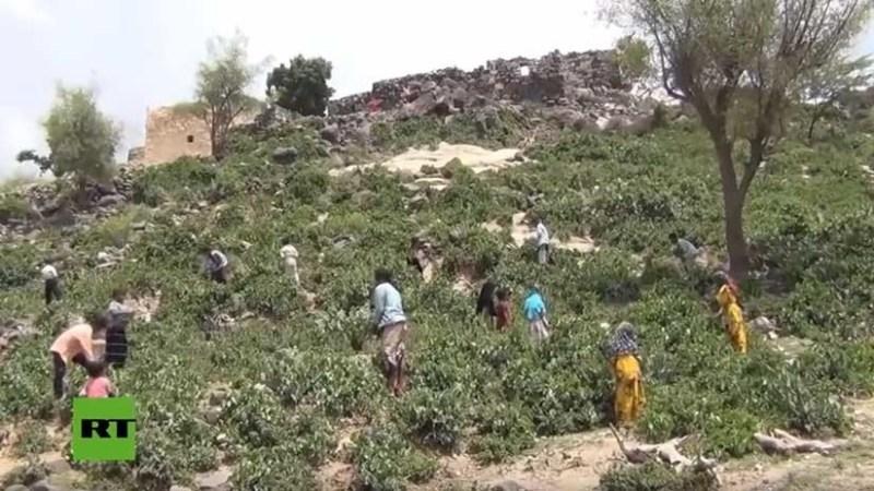 Hojas hervidas en vez de comida: Así sobreviven las familias más hambrientas de Yemen (VIDEO)