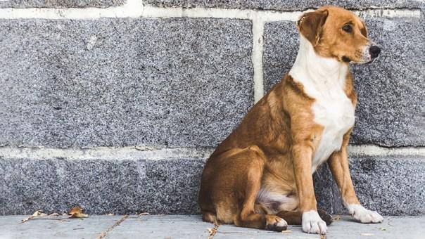 VIDEO: Un perro guía a una ambulancia hacia el lugar donde su dueño se había desmayado