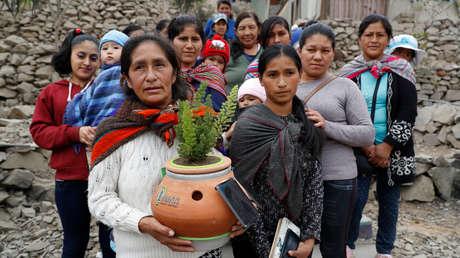 Alinti, la maceta creada por un joven peruano que produce energía limpia a partir de plantas y microorganismos (también purifica el aire)