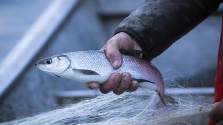 Symbolbild: Französischer Fischer, 25. April 2020.