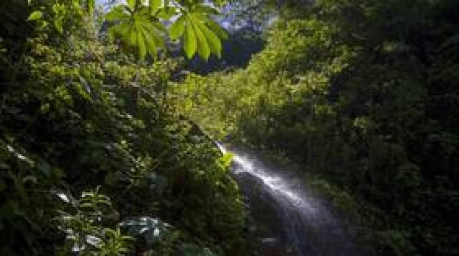 إزالة غابات هائلة في الأمازون تكشف عن هياكل بشرية عملاقة قديمة