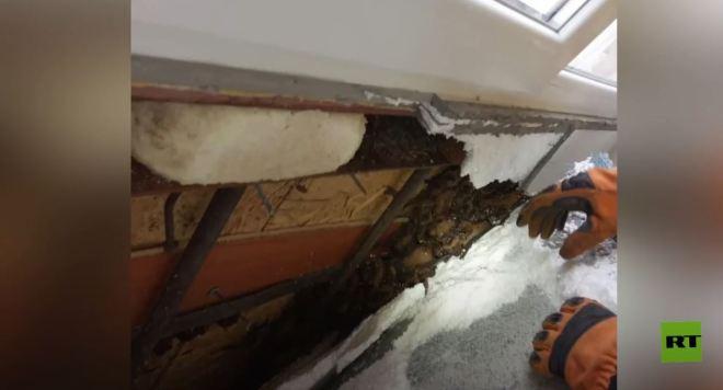 العثور على 500 خفاش في شرفة أحد المباني السكنية بأوكرانيا #RT_Arabic