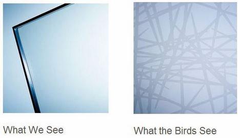 Bird Friendly Glass Helps To Prevent Birds Flying Into Them