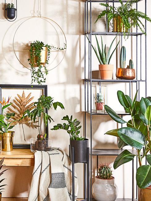 etageres pour plantes decouvrez la