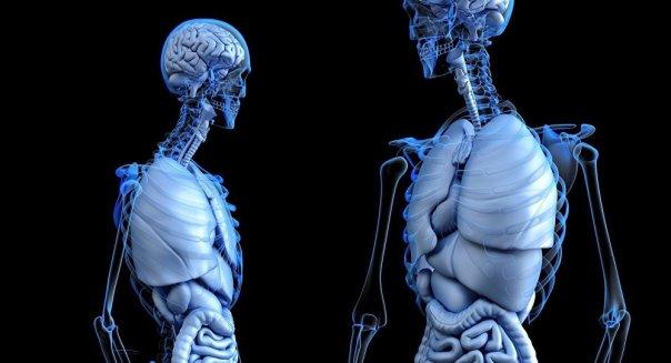 El cuerpo humano (ilustración)