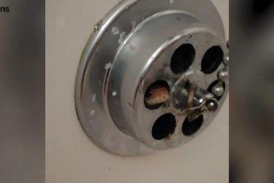 Bathtub Drain Switch Won T Stay Down Bathtub Ideas