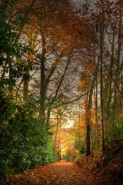An autumnal walkway in the Phoenix Park, Dublin, Ireland by theoherbots