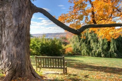 A bench beneath an old tree in the Wave Hill botanic garden, overlooking the Hudson River and the Palisades. Wouldn't you love to just spend a fe by theoherbots