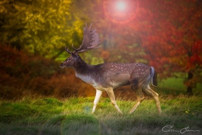 A long distance shot of a lonely deer on an autumn evening just as the sun started to set. by theoherbots