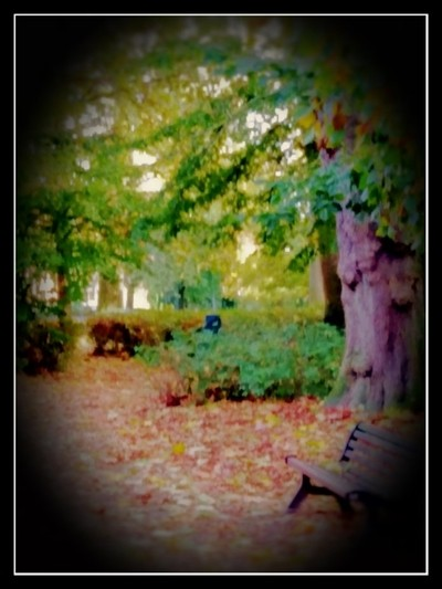 Autumn 2019 Stadspark Tienen Belgium Photo 3 How beautiful autumn can be by theoherbots