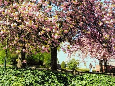 Welkom in Tienen My spring walk 11-04-2020 My walk along in Tienen Belgium Sincerely Theo-Herbots-Photography https:--groetenuittienen.blog- by theoherbots