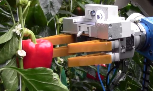 robot-pepper-picker