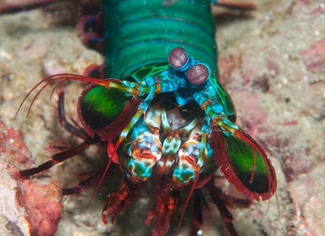 mantis-shrimp-tech