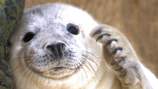 selfie-seal