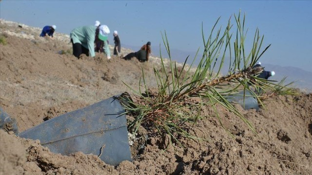 Turkey plants 75,000 trees in northern Syria