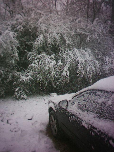 Snow In Alabama #4