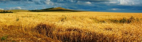 Entreprises de travaux et services, à l'agriculture et aux territoires