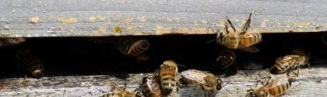 Il lâche des abeilles sur l'huissier avant de se retrancher chez lui