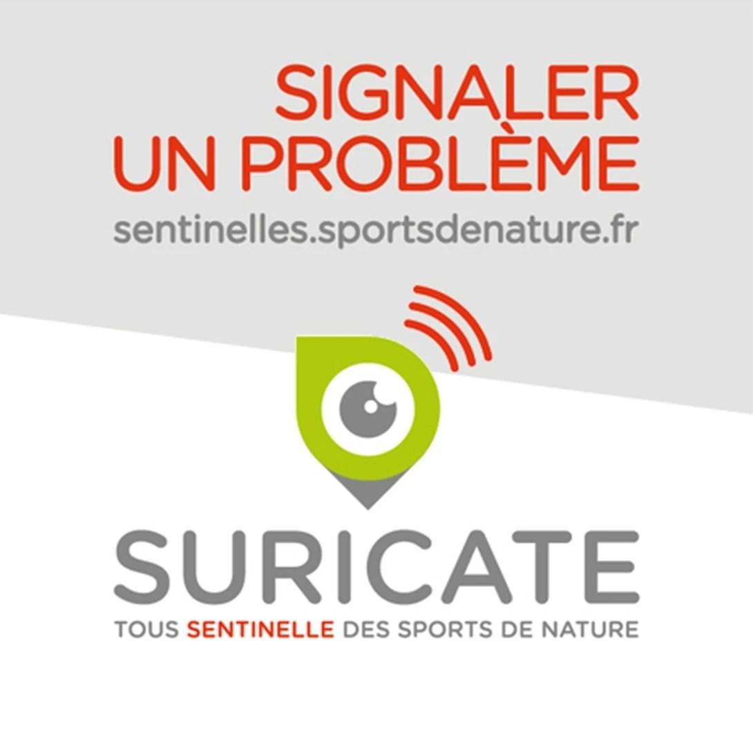 logo SURICATE