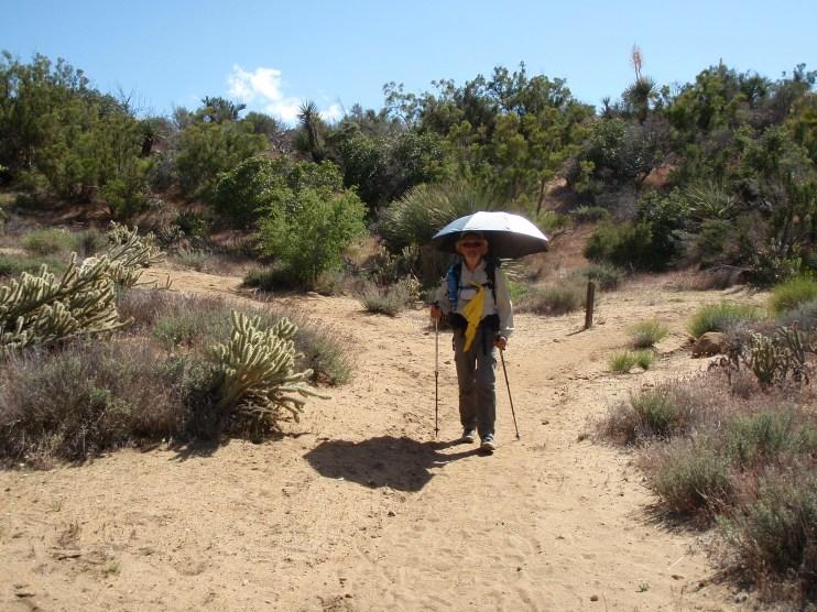 Sojo in California Desert