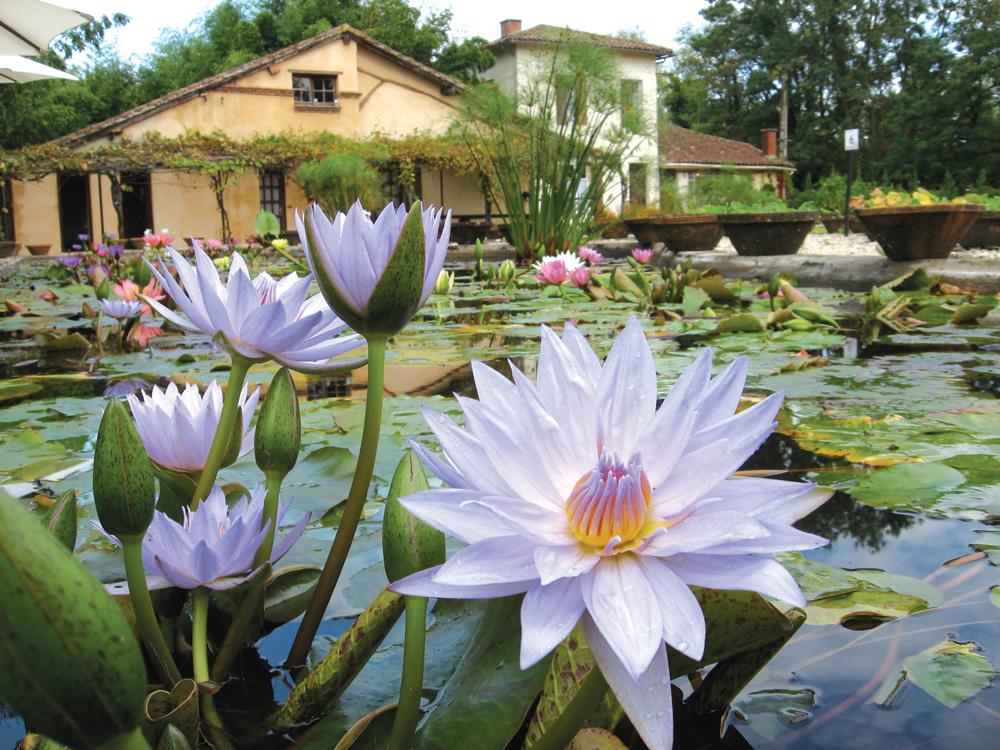 Le Jardin des Nénuphars Latour-Marliac