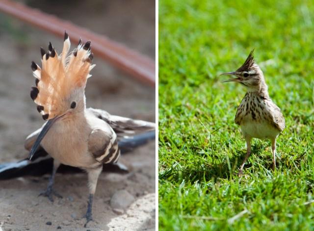 BIRDS_resize