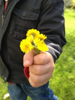 child holding dandelions