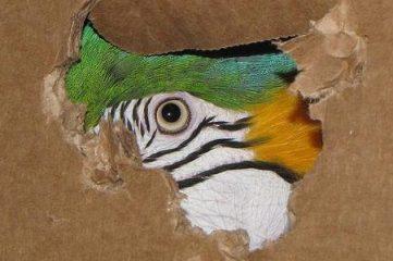 photo of a bird peaking through hole in cardboard box