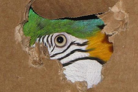 photo of a bird peaking through hole in cardboard box