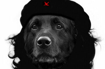 photo of dog dressed up like Che Guevara