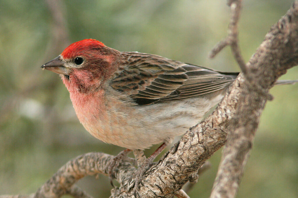 photo of a finch