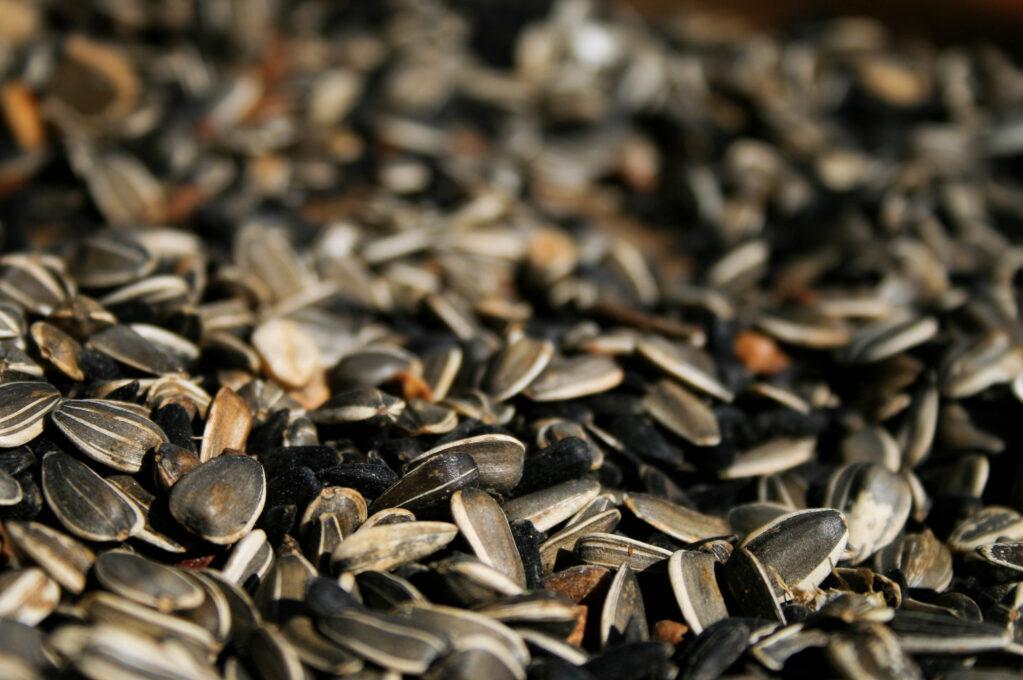photo of sunflower seeds