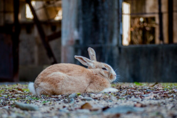photo of rabbit on Okunoshima (Rabbit Island)
