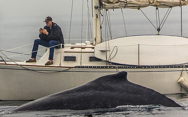 MUST CREDIT: @esmith_images/Instagram This Instagram photo shows a man missing a humpback whale surface two feet away from him because he was glued to his phone.  The moment was caught during a whale watch in Redondo Beach, California, professional photographer Eric Smith told ABC News today.  Smith said he had about five photos of whales with the private sailboat in the background, but the guy never got off his phone in any of the pictures.