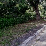 Lot for Sale near Talamban Cebu City