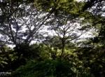 greenwoods-150sqm-ph2-pic5