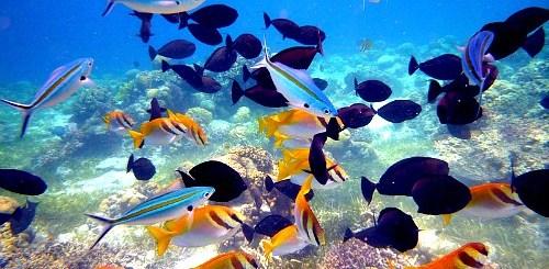5 Quick Island Getaways in Cebu   Cebu Finest