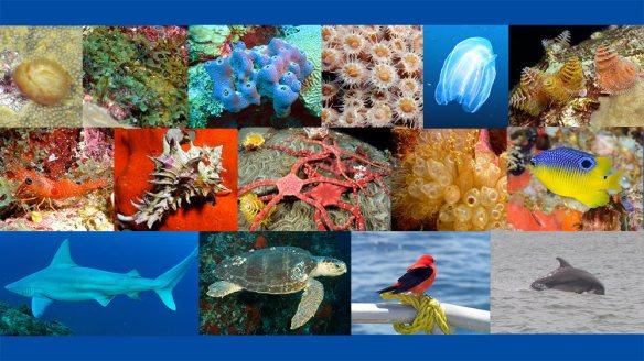 Various species at Flower Garden Banks National Marine Sanctuary