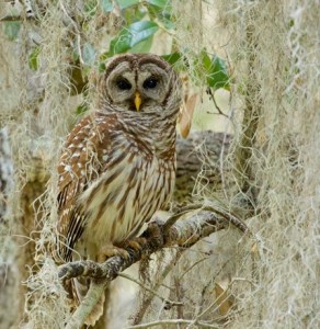 Fall Outings in Nature: Guided Night Hike & Earth Examen @ Armand Bayou Nature Center | Pasadena | Texas | United States
