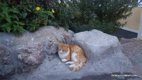 Cats in Oia