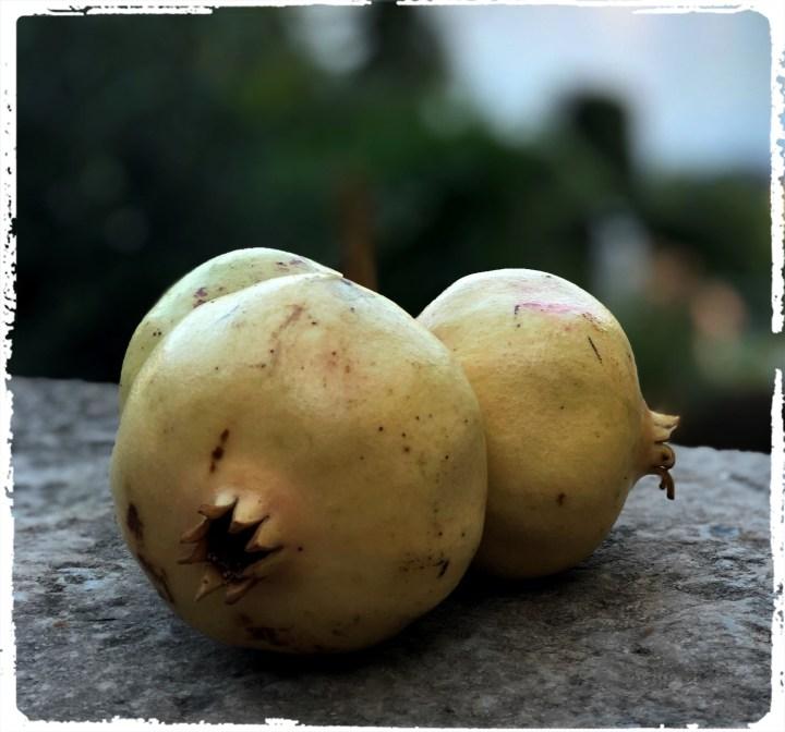granatäpple.jpg