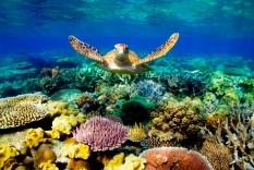 great-barrier-reef (c) 50shadesofage (dot)com