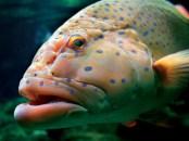 large_tropical_reef_fish (c) cairnsunlimited (dot)com